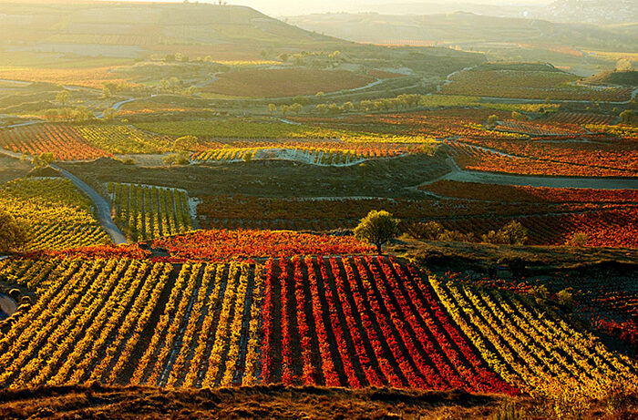 Vineyard in La Rioja Spain 700x461